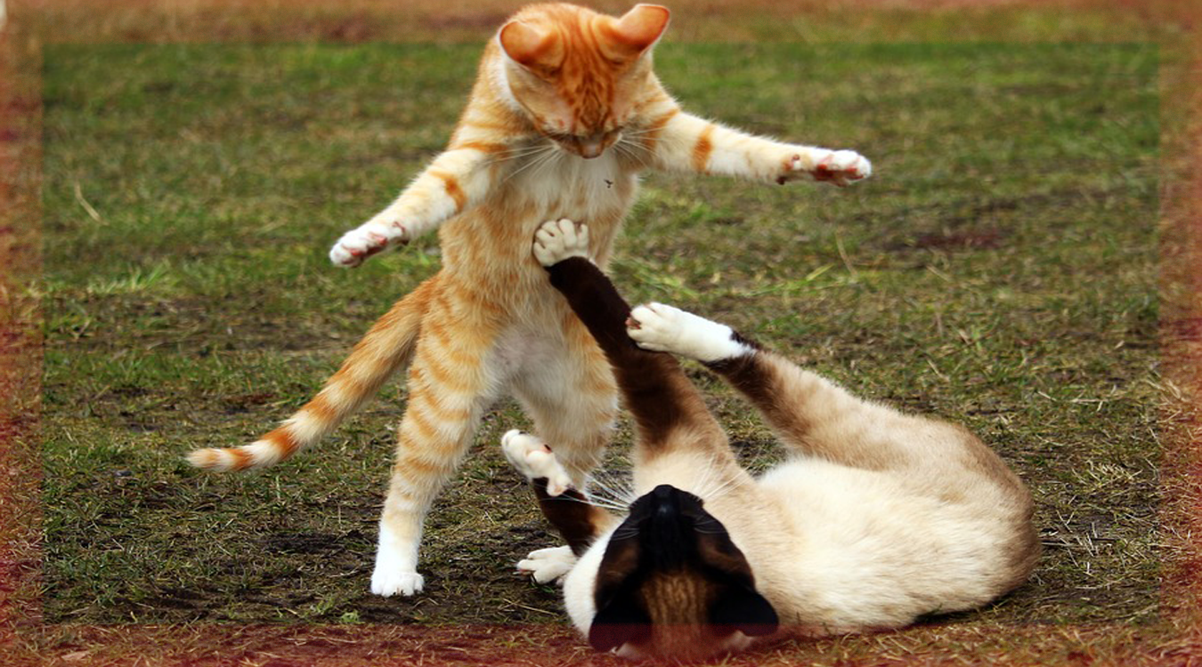 catfighlovet